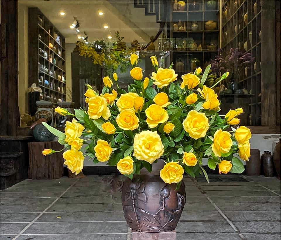 hoa hồng vàng rất hộp với bình màu sẫm, loại này vẫn là bình cổ rộng , tầm 14cm