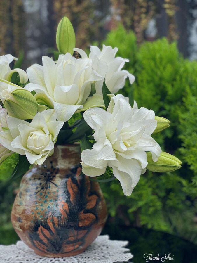 cận cảnh vẻ đẹp của hoa ly khi đã nở rộ