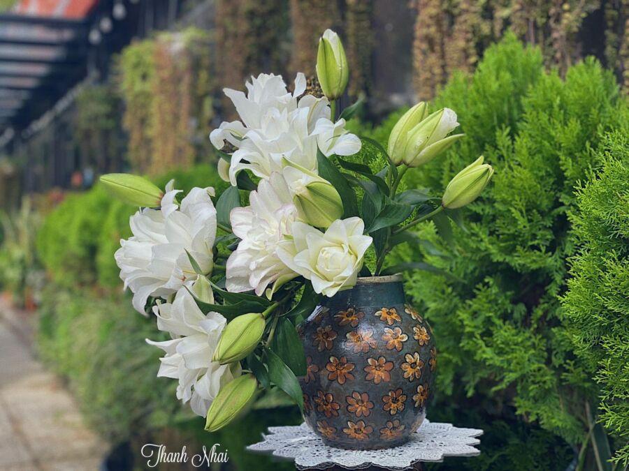 hôm nay mình thả hoa ly nhẹ nhàng uốn lượn tự nhiên