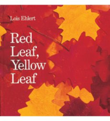 cuốn sách lá vàng lá đỏ
