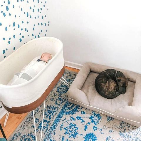 Em bé ngủ trong chiếc giường ngủ thông minh giường cũi kỳ diệu trong nhà trẻ có bức tường chấm bi màu xanh và tấm thảm hoa màu xanh và trắng.  Một con chó ngủ bên cạnh nôi trên giường dành cho chó.